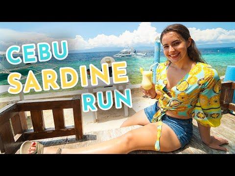 Sardine Run at Panagsama Beach - Moalboal, Cebu