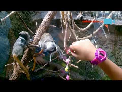 Nádherný den v zoo