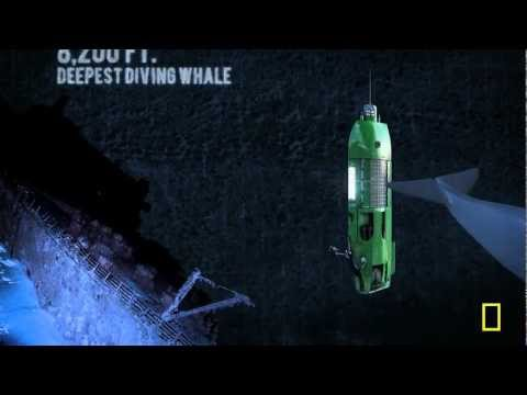 'Deep Sea Challenge' (Long Way Down)