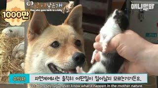 Video Dog giving birth to a kitten...? Oh my world... MP3, 3GP, MP4, WEBM, AVI, FLV Juni 2018