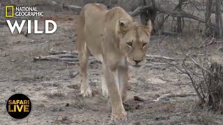 Safari Live - Day 251 | Nat Geo Wild by Nat Geo WILD