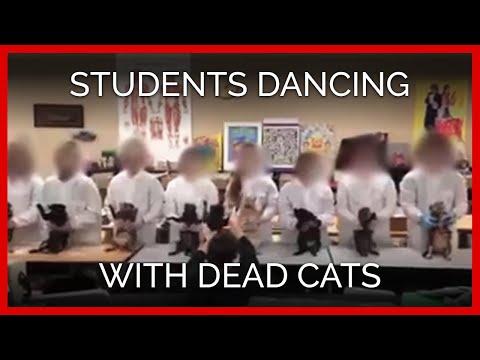 Танец школьников с мертвыми кошками