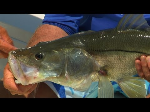 Deadwood – Pulling Snook and Redfish out of the Florida Everglades