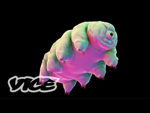tardigrada: l'unico animale che sopravvive nello spazio