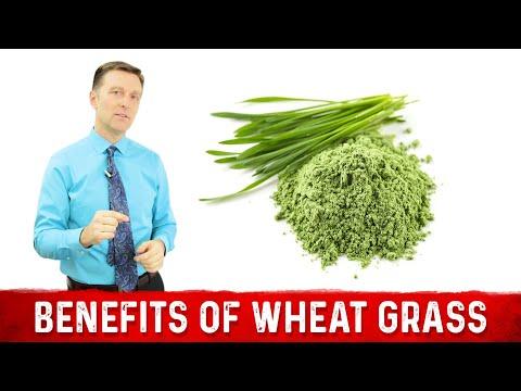12 Scientific Benefits of Wheat Grass