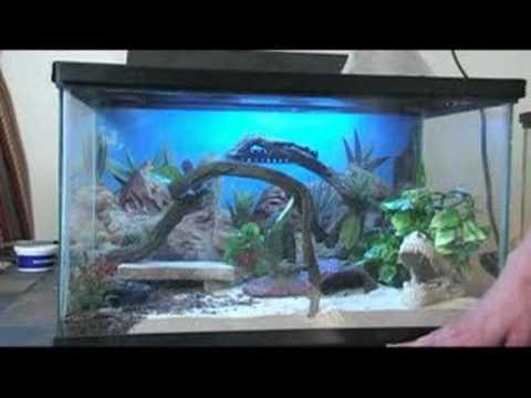 El Geko o Gecko