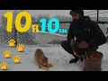 Download Lagu How to feed 10 street animals with 10 Dolars Mp3 Free