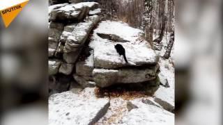"""بالفيديو.. """"كونت"""".. قط سافر وتسلق جبال أكثر مما تتخيل"""