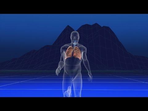1-au.coeur.des.organes.les.modifications.physiques.a.l.effort