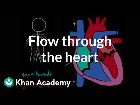 Flow through the Heart