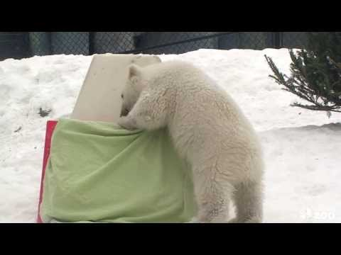 From Adele Dazeem to the cutest polar bear cub in the world, take a look at this week's best viral videos.