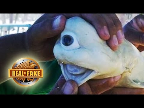 BIZZARE ONE EYED SHARK - real or fake?