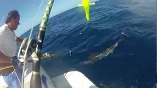 peche au gros 50 min pour un marlin de 90 kg et de 2m50.