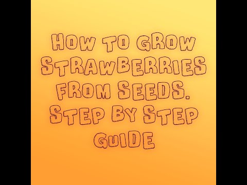 HOW TO GROW STRAWBERRY SEEDS. A STEP BY STEP GUIDE