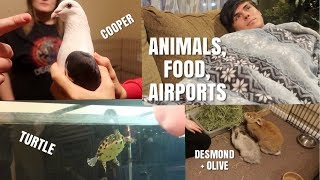 Rabbits, Birds, Dogs, Turtle + Airport and Food | Vlogmas Day 8 by Emma Lynne Sampson
