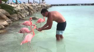 Aruba atrakcje wakacje flamingi.