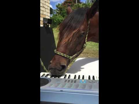 Pianoa soittava hevonen – Hyvin soi!