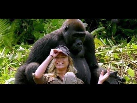 Verliebter Affe: Dieser Gorilla baggert die Frau seines Retters an