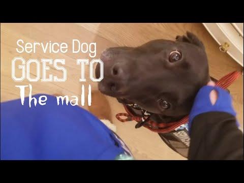 SERVICE DOG At The Mall (Vlog) Birthday Shopping