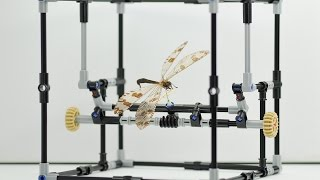 Lego helps scientists study delicate insect specimens