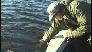 Ловля судака - осенью спиннингом