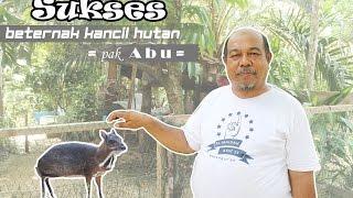 Video Sukses Beternak Kancil (Successful Breeding Deer) MP3, 3GP, MP4, WEBM, AVI, FLV April 2019