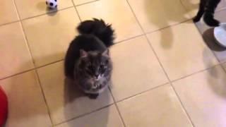 Cats demand food