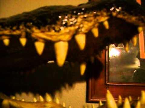 Alligator head, do it yourself taxidermy