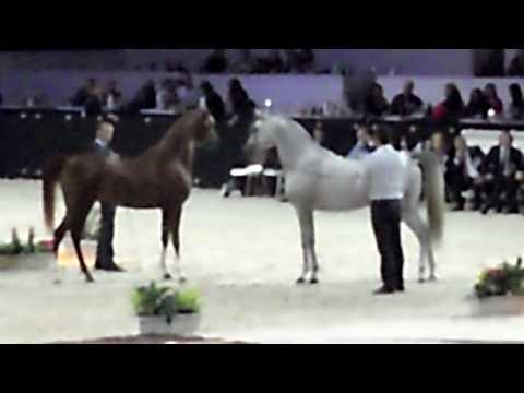 Arabian Horses World Chship ' Show **
