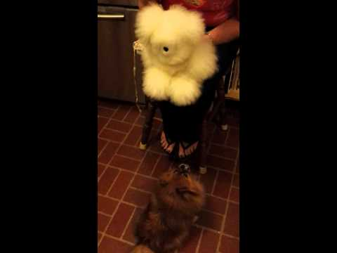 Chloe's Toy (видео)