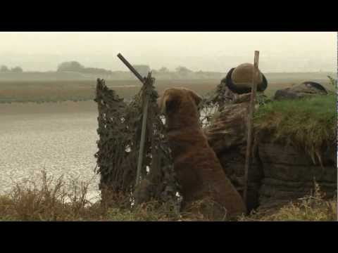 Video: An introduction to wildfowling
