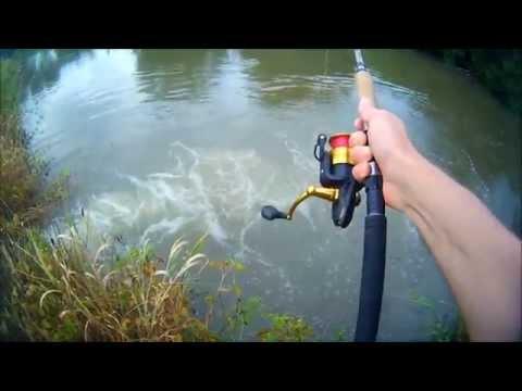 Pesca spinning : siluro - attacco in diretta