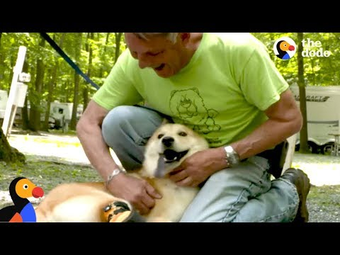 Special Dog Rescued By Man Who Drives Across The Country To Save Him | The Dodo Comeback Kids S01E05