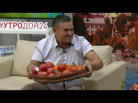 Выращивание томатов в Ростовской области