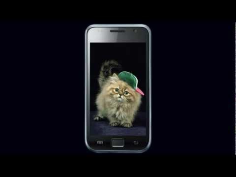 Video of Ginger Cat Cute Wallpaper