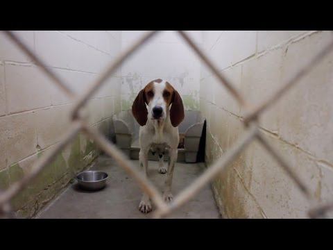 Save A Hound Dog Rescue Video