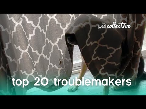 Video: 20 Adorable Animal Trouble Makers