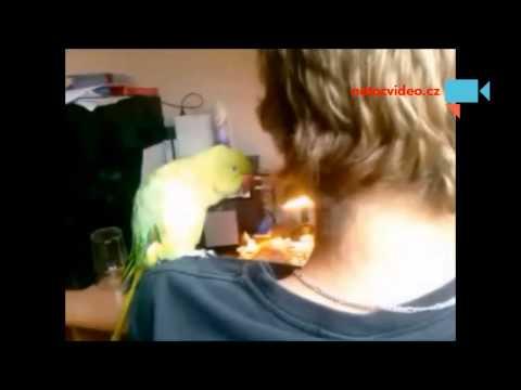 Papoušek Alexandr Malý se s námi hádá