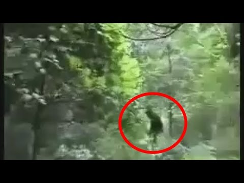 Sasquatch Caught On Tape in an Unknown Forest