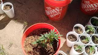 Outdoor activities the before 2020 let's go by Black G 420