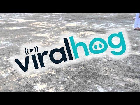 Cadela finge que não pode andar
