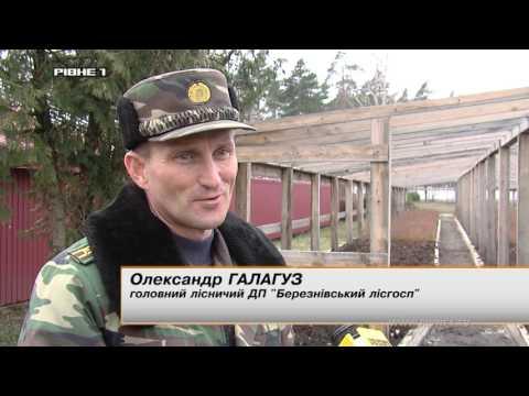 <a href='/Info/?id=79638' >Звідки береться ліс на Рівненщині? [ВІДЕО]</a>