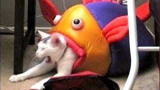 Video TO LAUGH or NOT TO LAUGH is NO QUESTION HERE, YOU WILL LAUGH! - Funny ANIMAL compilation MP3, 3GP, MP4, WEBM, AVI, FLV Juli 2017