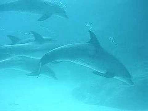 Buceo con delfines