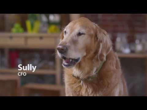 Talking Dogs Confess Their Opinion of Kibble Dog Food