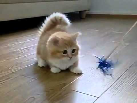 Super cute fluffy kitten confused