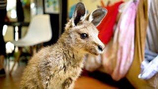 Couple Turn Home Into Kangaroo Sanctuary by Barcroft Animals