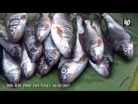 Yos Hav Zoov 2017 - Tua Ntses Lom Zem Heev Nawj (видео)