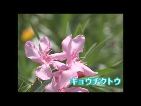 七月の塩河動画