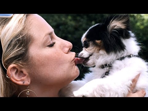 I Kissed A Dog and I Liked It!